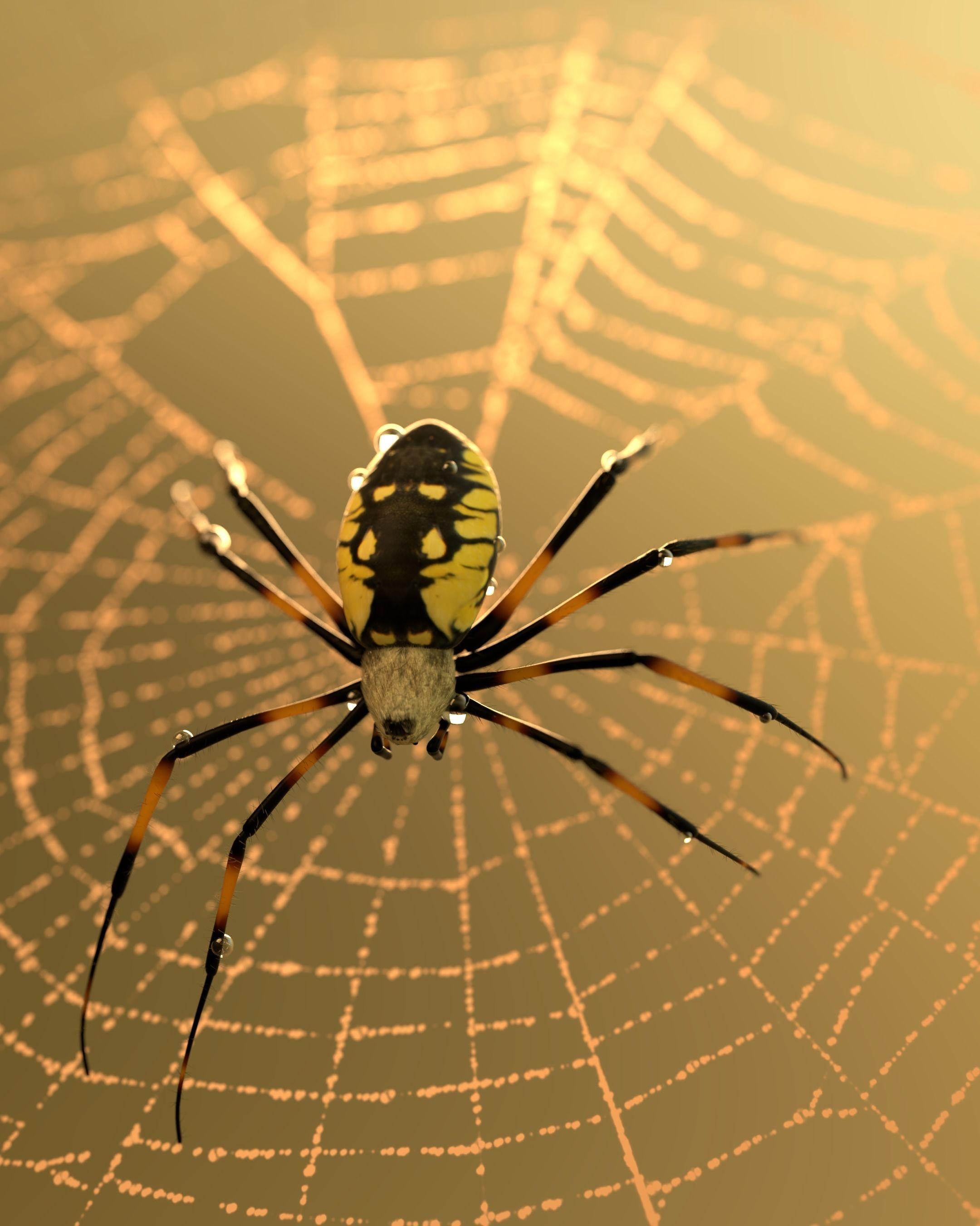 Black and Yellow Garden Spider 3D asset | CGTrader