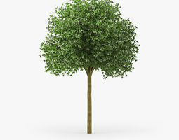 3D model Hibiscus tree 04
