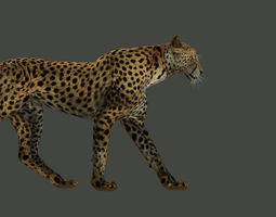 rigged Leopard Rigged 3D model