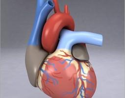 Human Heart 3D