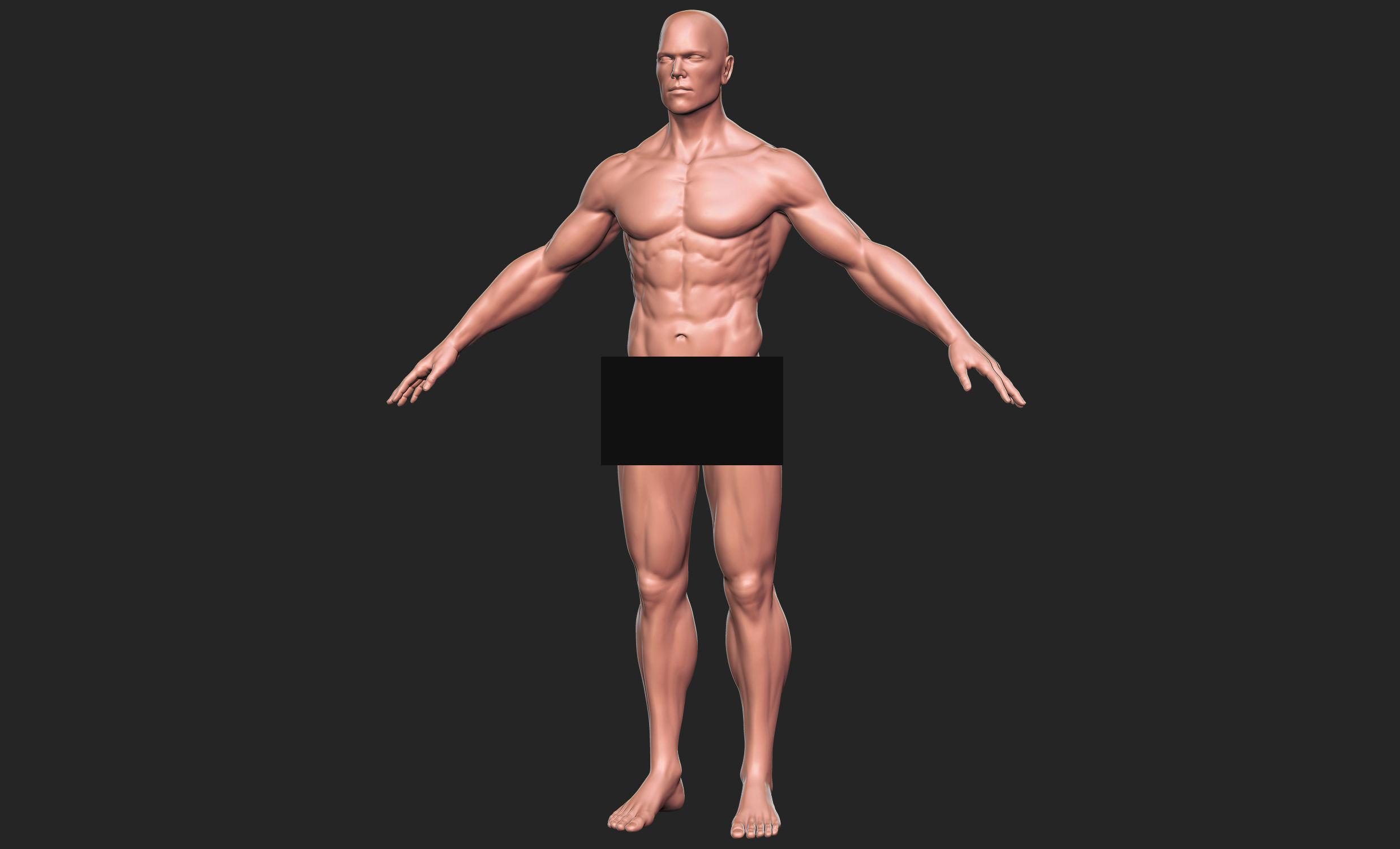 Human Man Anatomy 3d Model Cgtrader