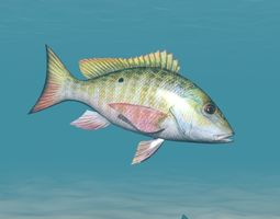 Fish Lane Snapper 3D model