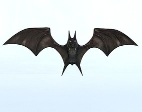 3D asset Bat Mammal Bird