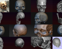 3D Skulls collection